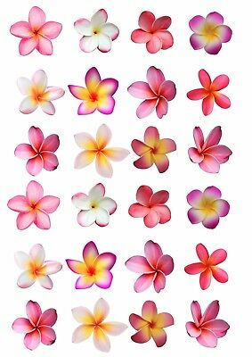24 Frangipani Flowers EDIBLE WAFER RICE PAPER Cupcake Cake Toppers PRINTED IMAGE