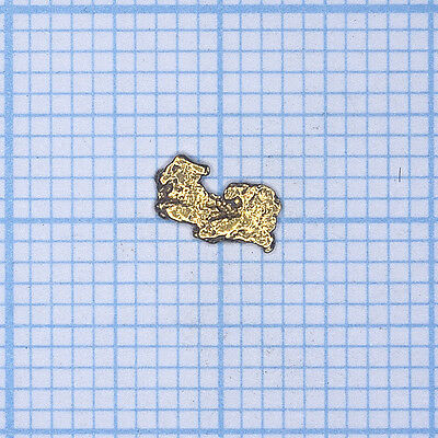 0,098 gramme, pépite d'or naturel de Deadwood creek Gold nugget (782)