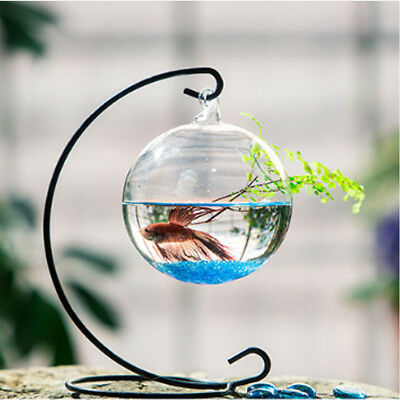 Clear Hanging Glass Vase Fish Tank Aquarium Planter Container Home Decoration