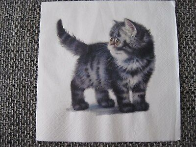 1 Serviette / napkin graue Katze 2-lagig fluffy grey cat 2-ply