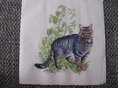 1 Serviette / napkin Katze im Gras 2-lagig cat in the grass 2-ply
