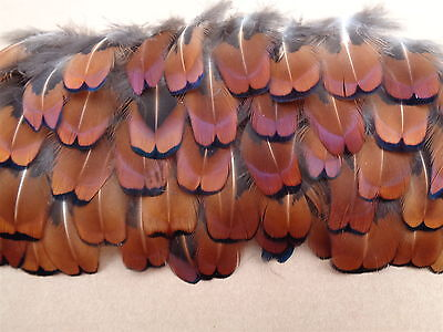 """100 Cock Pheasant Neck Feathers 1"""" - 2"""" - Christmas Crafting, Jewellery Making"""