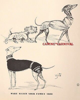 WHIPPET GREYHOUND  DOG ZITO  Risque 1941 Vintage Art Print