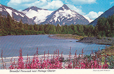 Fireweed, Portage Glacier. Jack Anderson Photo. Alaska Joe Original. Postcard.