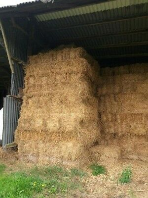 150 bales of this year's hay.Hay bales.Collection only. £3 per bale.