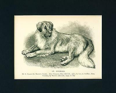ANTIQUE Dog Print 1897 named Saint Bernard Dog CHANG