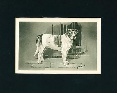 Dog Print 1899 Saint Bernard by Arthur Wardle ANTIQUE