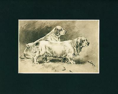 Dog Print + Article 1906 Clumber Spaniel by Arthur Wardle ANTIQUE