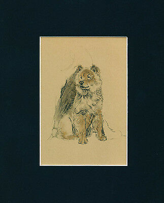 Dog Print 1934 Chow Chow by CECIL ALDIN Alert looking Dog VINTAGE