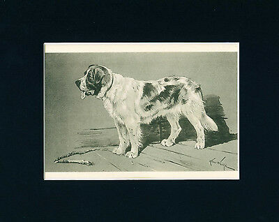 Dog Print + Article 1899 Saint Bernard Arthur Wardle ANTIQUE