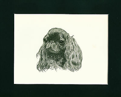 Dog Print 1935 King Charles Spaniel by Francis Wardle VINTAGE