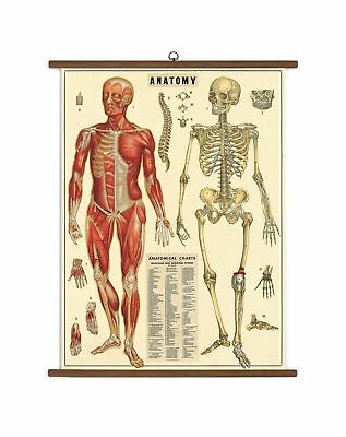 Cavallini Papers Anatomy Vintage School Chart NO TAX