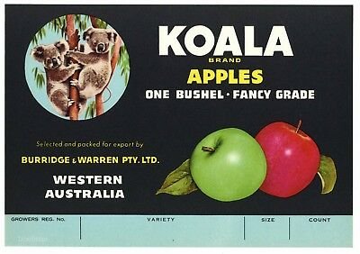 KOALA Brand Vintage Tasmanian Apple Crate Label, Bear, ***AN ORIGINAL LABEL***