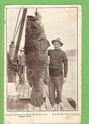 #b.   Australian  Fishing   Postcard - Huge Groper Caught In Clarence River