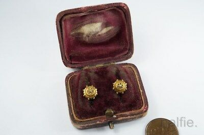 TINY ANTIQUE ENGLISH 9ct GOLD ETRUSCAN EARRINGS c1890 BOXED