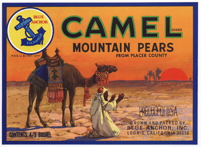 CAMEL Vintage Loomis CA Pear Crate Label, Arab, Pray, Desert, AN ORIGINAL LABEL