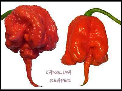 10+ Fresh Carolina Reaper Super Hot Pepper Seeds