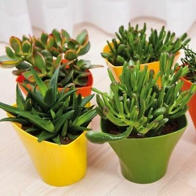Flower Pots ,Twister Shape ,8 Colours ,5 sizes, Gloss Plastic Plant Pots Planter