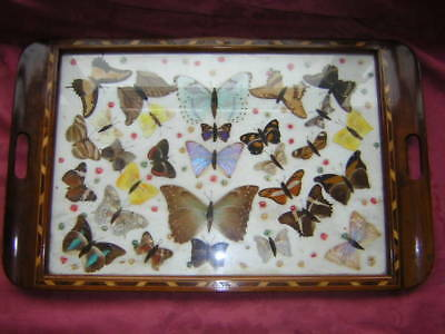 Antique Inlaid Mahogany Butterfly Tray