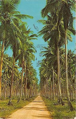 BR5221 Copra Plantation  indonesia
