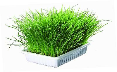 Grass for Cats 100 grams