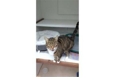 Cats Protection - Please feed our rescue cat of the week - Woody