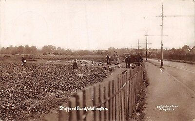 Surrey Wallington Stafford Road Men & Boys Working In Field Cabbages Photo Card