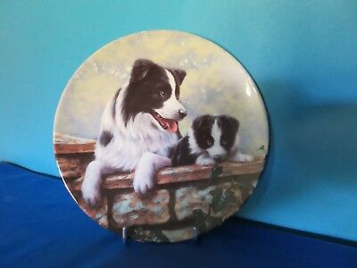 "Border  Collie  Collector Plate"" Thats  My  Boy"""
