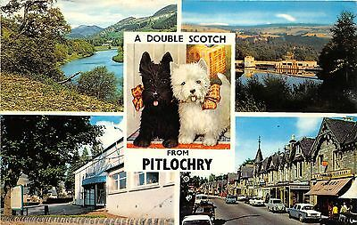 B89052 a double scotch from pitlochry dog car voiture scotland  14x9cm
