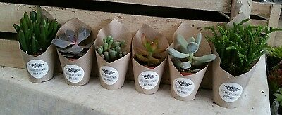 Set of 6 mini succulent plants -5cm pots- ideal for fairy gardens and terrariums