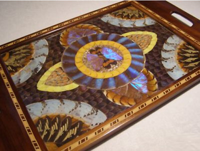Inlaid Wood Blue Morpho Butterfly Wing Tray 1900 - 1940s
