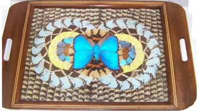 Vintage Butterfly Wings Curved Wood Tray Glass Top