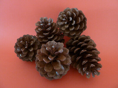 Pine Cones 22 Natural Small Pinecones Craft Christmas Decorations