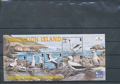 35725/ Ascension ** MNH Block  Fauna Vögel bird