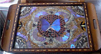 A  Vintage Real Butterfly Serving Tray. Made in Rio de Janeiro 1900s – 1940s