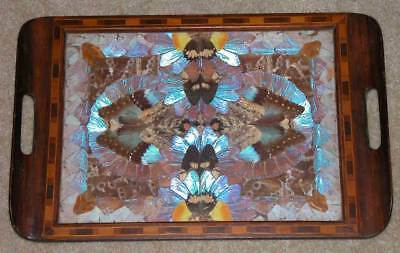 Vintage Butterfly Wing Art Inlaid Wooden Marquetry Tray