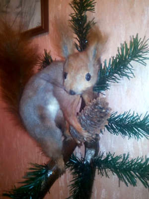 Real Taxidermy Squirrel Stuffed On Tree Bark Mounted Skin Mount Rodent