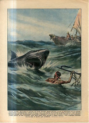 1936 Shark hunting in the Persian Gulf with man as living bait Antique Print