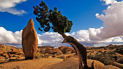 JOSHUA TREE CA 2 ac NATIONAL PARK VIEWS!  Recorded Tract Map MONTHLY PAYMENTS!