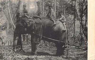 Burma A Captive Hind Or Tuskless Male Elephant Being Trained By The Karens Card