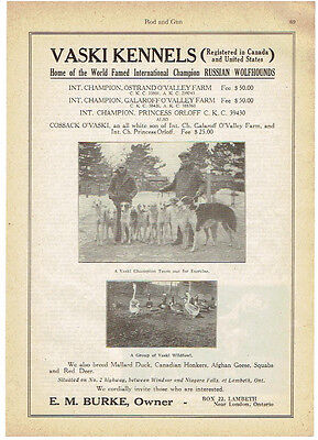 Original, 1927 - Vaski Kennels Ad - International Champion Russian Wolfhounds