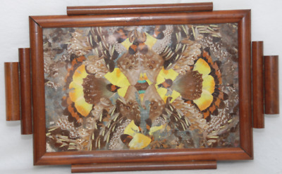 Wonderfull Vintage Butterfly Wing Tray with a Unique Frame.