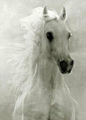 ZOPT241 handpainted animal white horse &horsehair art OIL PAINTING ON CANVAS