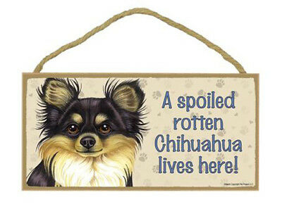 "Spoiled Rotten Chihuahua Lives Here  Sign Plaque Dog 10"" x 5"" gift long hair"