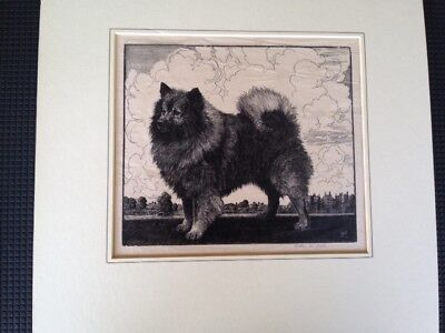 Keeshond Dog Antique Etching Print SIGNED Scarce by Helen R. Lock Standing Dog