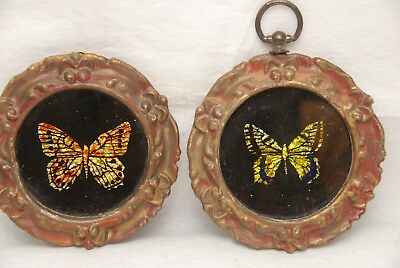 A Collection of 7 Beautiful Butterfly Art Pieces for a Great Wall Display.