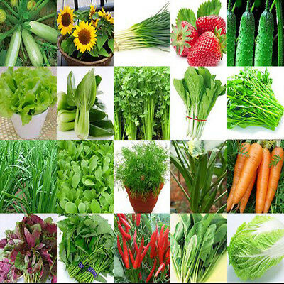 Non-GMO Lots Garden Vegetable Seeds Home Plants Flower Seed Organic Rare Variety