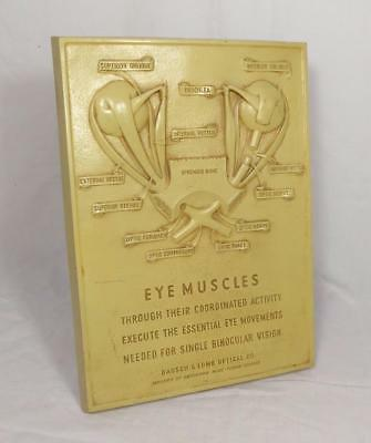 """Original Vintage~ c1930 ~ """"Bausch & Lomb"""" Eye Muscles Anatomical Embossed Plaque"""