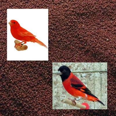 Other Bird Supplies Paste Breeding And Sponge Cake For Canaries Kiki Rood Mousse Factor Red