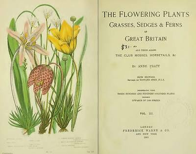 Wild Flowers Of Great Britain A Beautiful Collection Of 42 Old Book Scans DVD